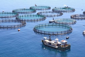 acuicultura dorada