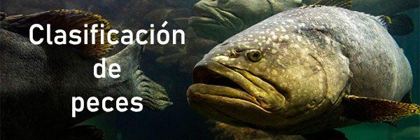 clasificación de peces