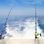 pesca currican