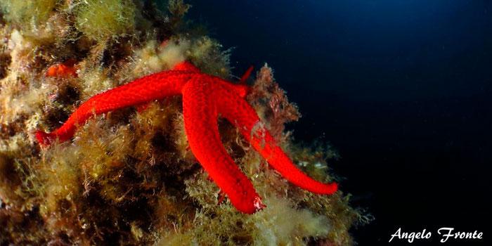 estrella de mar habitat