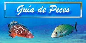 guia peces pecesmediterraneo