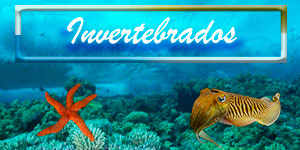 guia invertebrados marinos