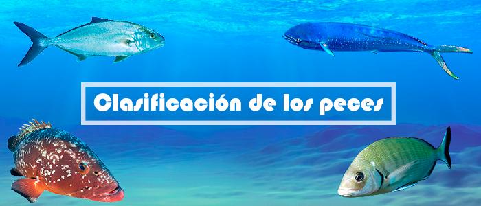 clasificacion_peces