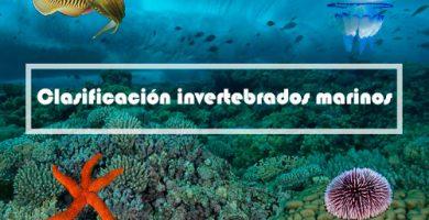 clasificacion invertebrados